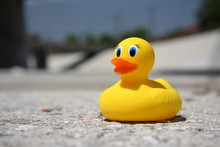 Rubber Ducky In The Los Angeles River 3