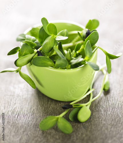 In de dag Apotheek Green sunflower sprouts in a cup