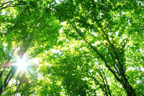 Foto op Plexiglas Groene forest