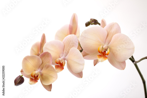 Keuken foto achterwand Orchidee Isolated orchid flowers on white
