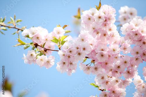 Fototapeta wiosna kwiaty