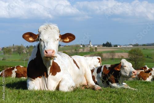 Poster de jardin Vache douce France