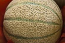 Melon Side View