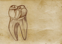 Tooth Illustration (from Late ...