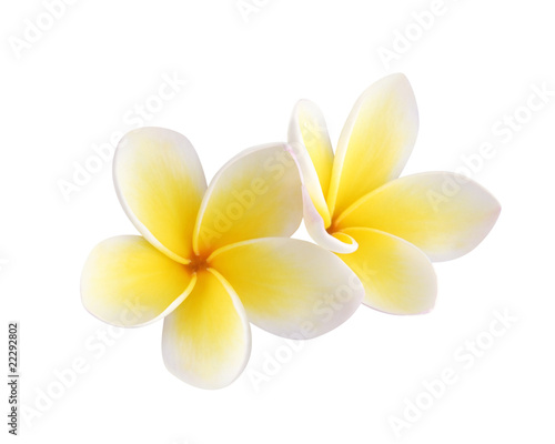 Foto op Plexiglas Frangipani Two frangipani flowers isolated on white
