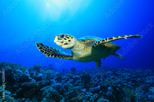Poster Tortue Sea Turtle