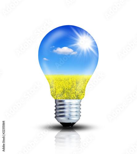 Rapsfeld - Erneuerbare Energie Canvas Print
