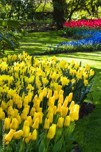 Naklejki tulipany zolte-niebieskie-i-czerwone-wiosenne-kwiaty