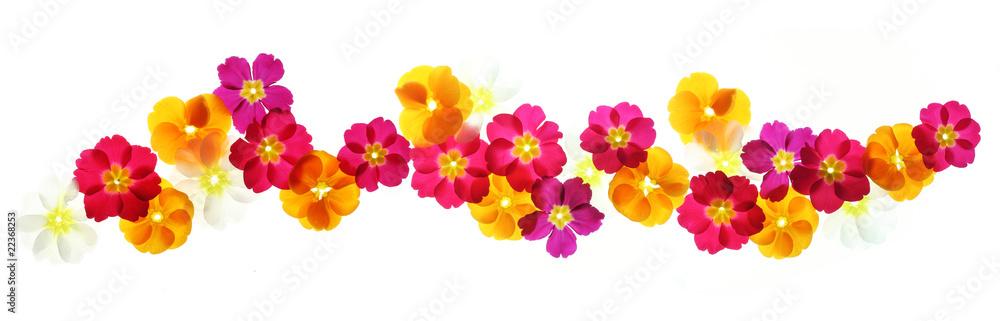 Fototapety, obrazy: Summer flowers border