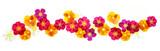 Fototapeta Kwiaty - Summer flowers border