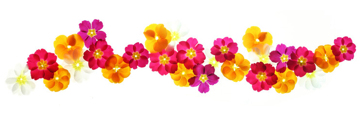 Summer flowers border