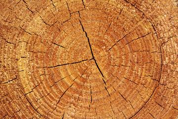 Fototapeta Do restauracji Details einer Baumscheibe
