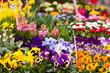 canvas print picture - Blumen auf dem Markt, flowers on a market