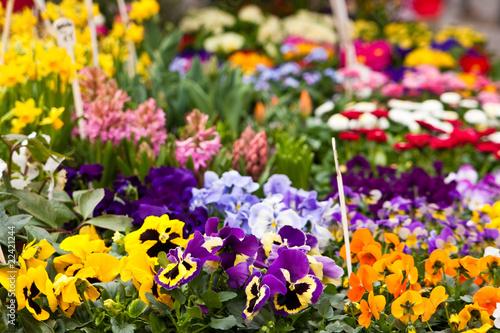 Ingelijste posters Pansies Blumen auf dem Markt, flowers on a market