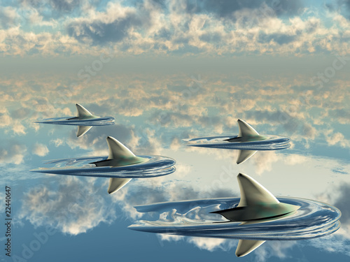 Photo ailerons de dauphins