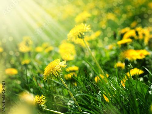 Poster Jaune Beautiful Spring landscape