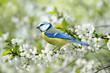 Leinwandbild Motiv Frühling 122
