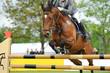 Pferde 112