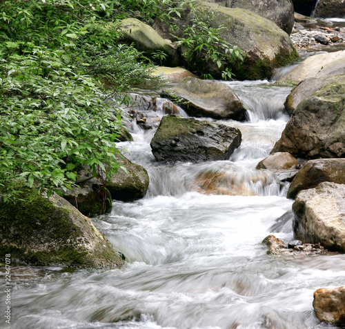 Fototapeten Forest river nature