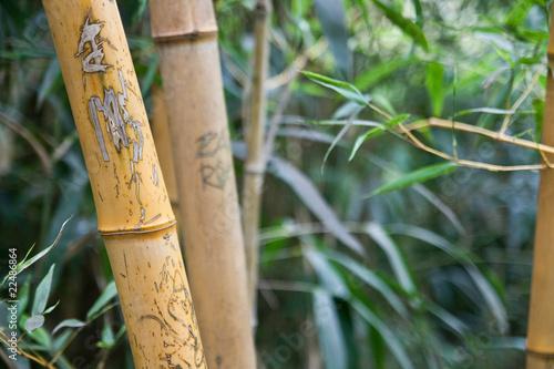bambous graffiti