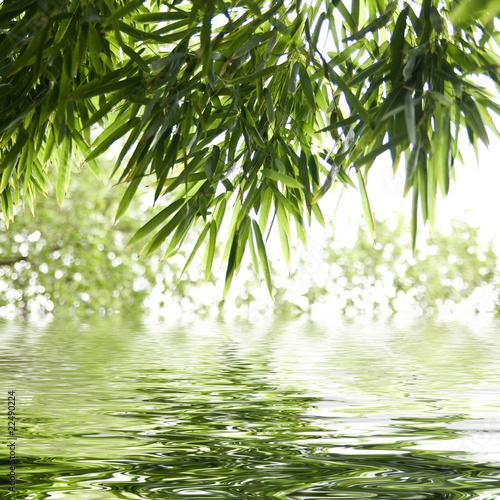 Fototapeta bambus   odbicie-lisci-bambusa-w-wodzie