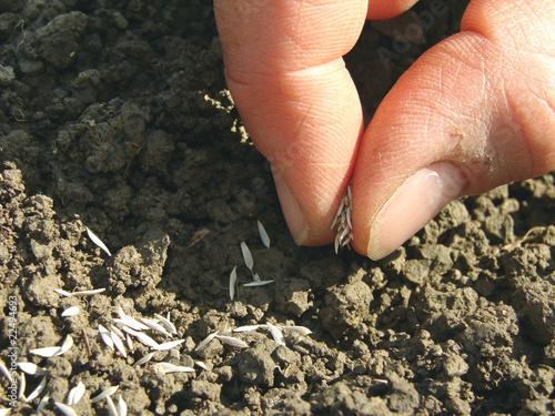 Fotografie, Obraz sowing seeds