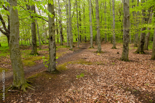 Photo Stands Road in forest Waldweg