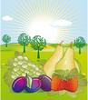 Obst-Garten