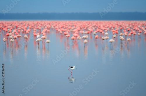 Tuinposter Algerije flock of flamingos