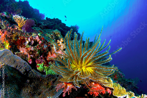 Canvas Prints Under water Coral Reef, Similan National Park, Thailand