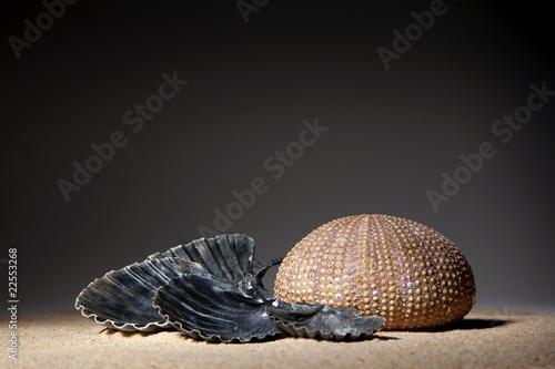 Photo sur Plexiglas Zen pierres a sable Ambiance zen - coquillages et sable