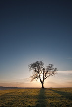 Silhouetted Single Tree At Sun...