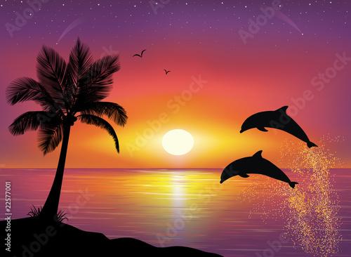 Staande foto Dolfijnen Dolphins.