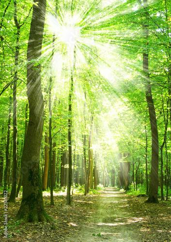 Fototapeten Wald forest sunlight