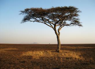 Lonely Tree Tanzania