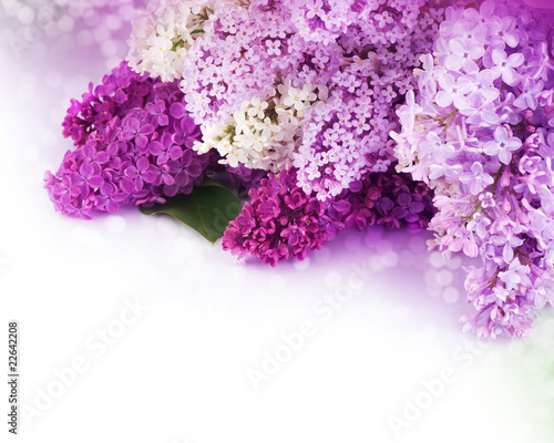 Tuinposter Lilac Beautiful Lilac Flowers Border