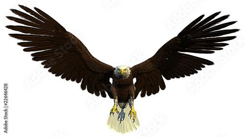 Fotografie, Obraz  american bald eagle front