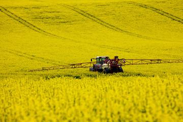Fototapeta Traktor im Rapsfeld