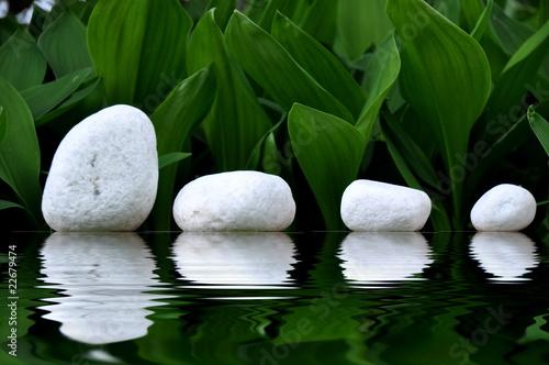 Photo Stands Water lilies Steinreihe
