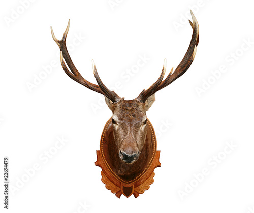 Foto op Canvas Hert Deer head isolated on white background