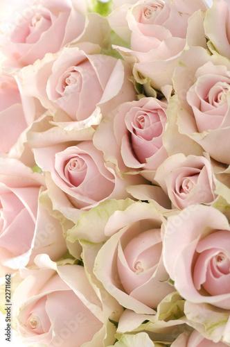 tlo-rozowe-roze