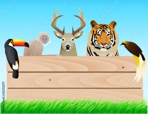 dzikie-zwierze