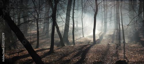 Foto op Plexiglas Grijs morning and fog
