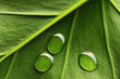 canvas print picture Water drops on leaf