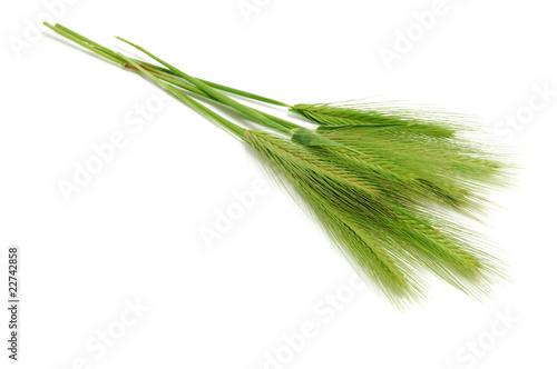 Fotografía barley spikes