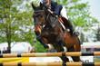 Pferde 117