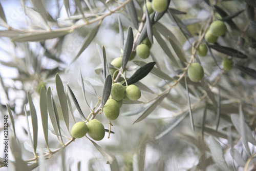 Wall Murals Olives