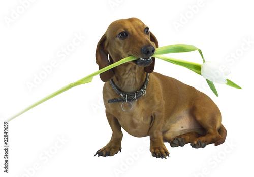 Photo  dog 11