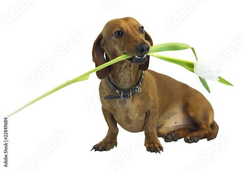 Photo  dog 12