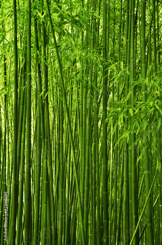 Photo Stands Bamboo Bamboo forest texture